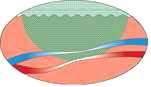 illustration cynosure2